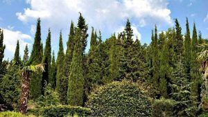 Visitar la Reserva Botánica Kanaka; Conocer la Reserva Botánica Kanaka